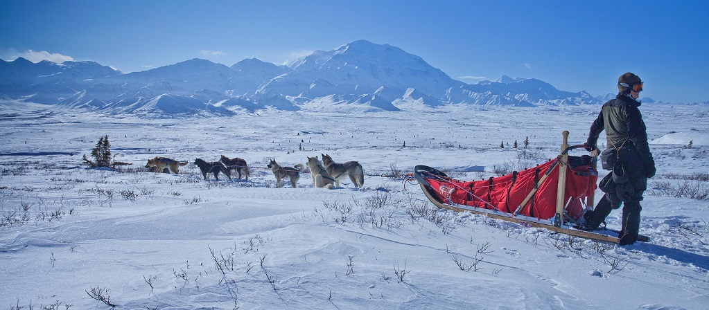 dog-sled-Pixabay_skeeze.jpg